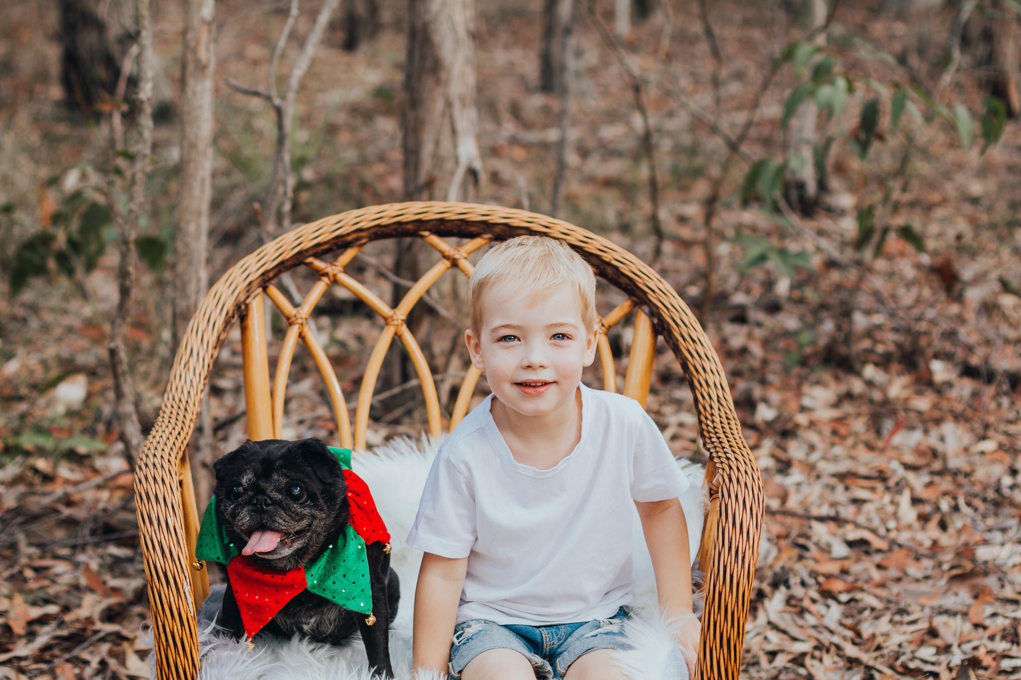 cute-pet-pug-with-boy-at-christmas
