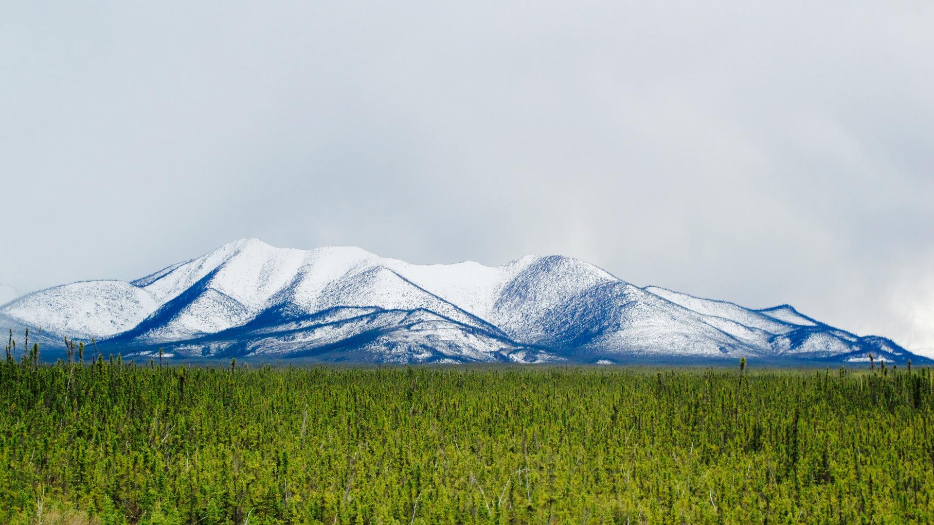The Great Yukon Tundra.