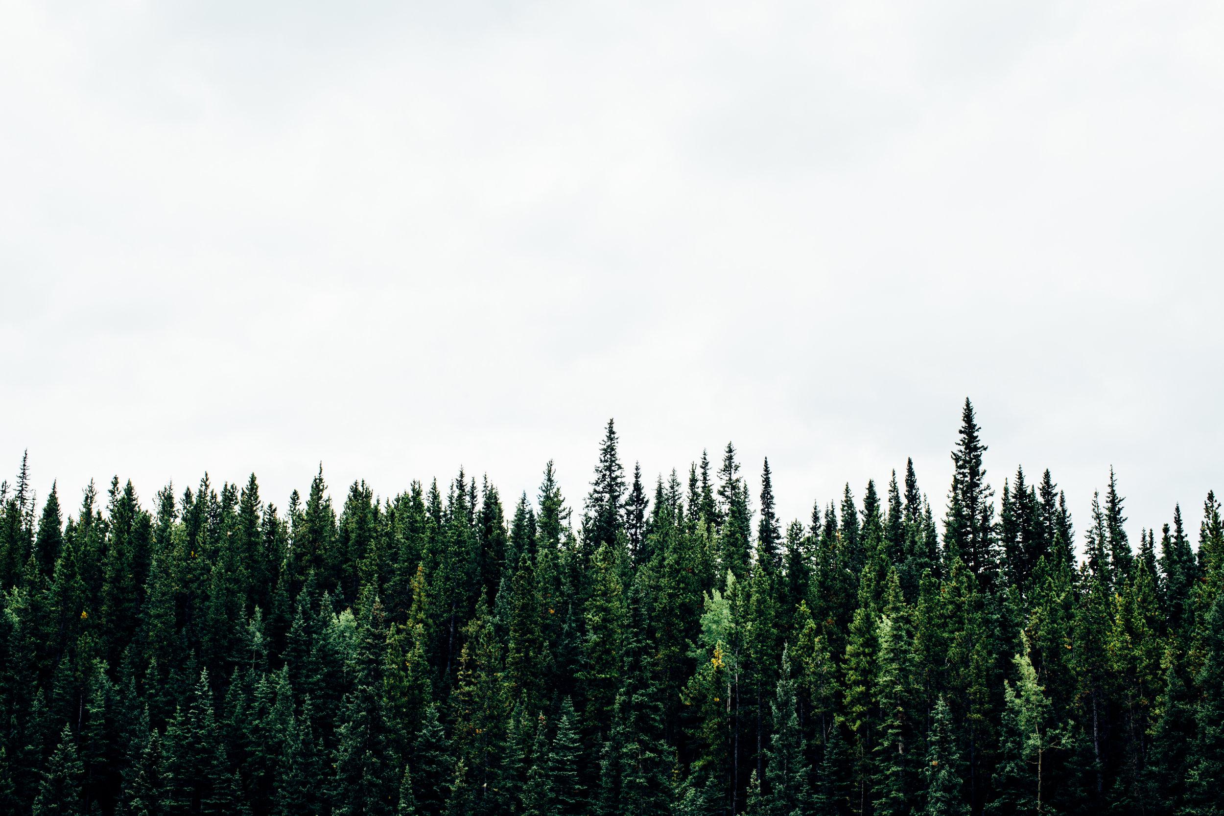 Gut Kirschlacher Forst