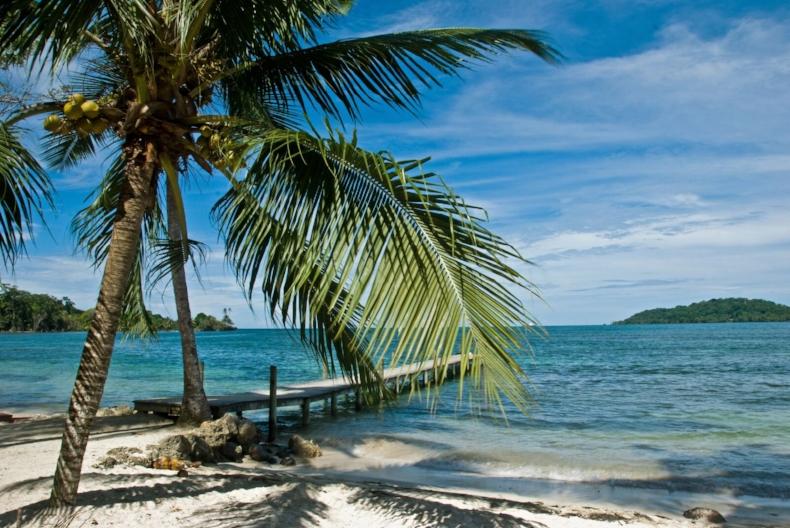 Ocean Breeze & Coconut Trees