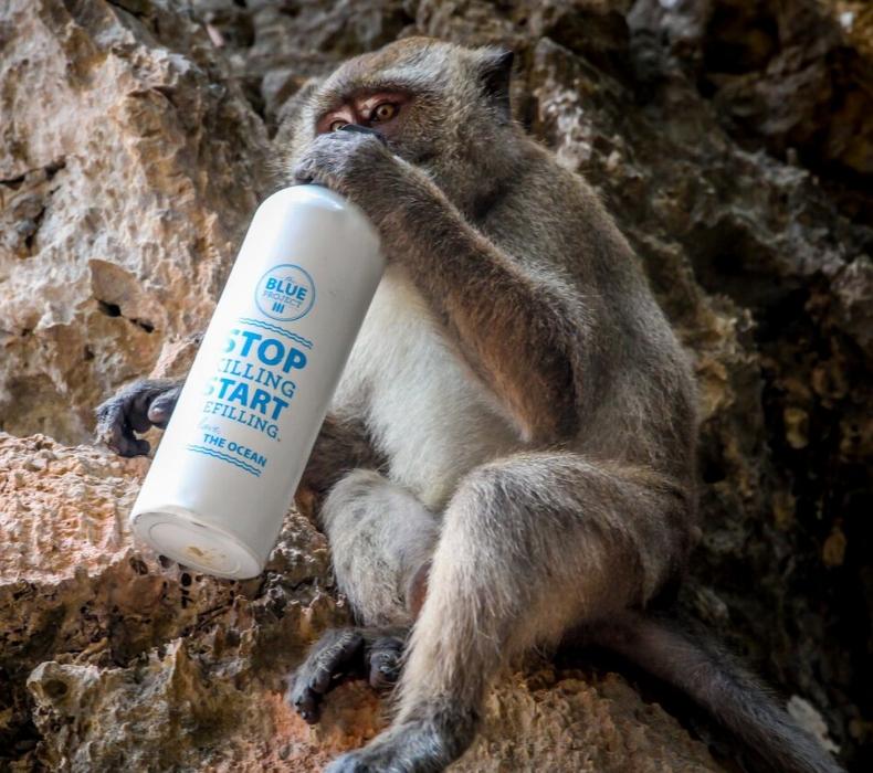 Monkey in Krabi, Thailand