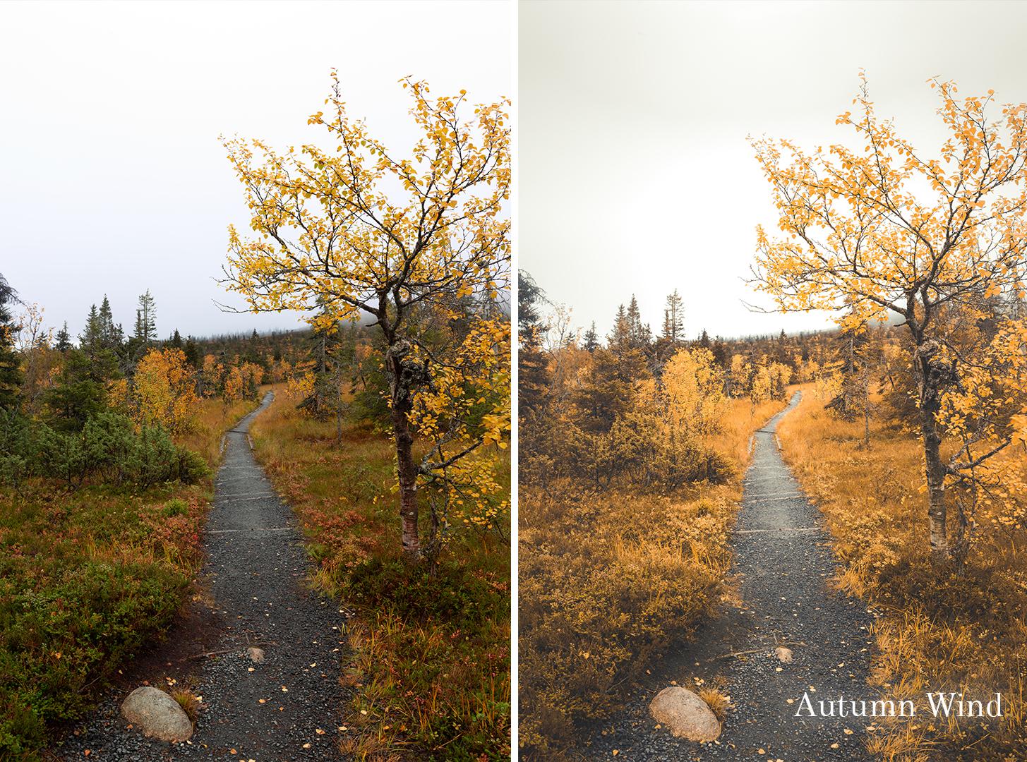autumn wind.jpg