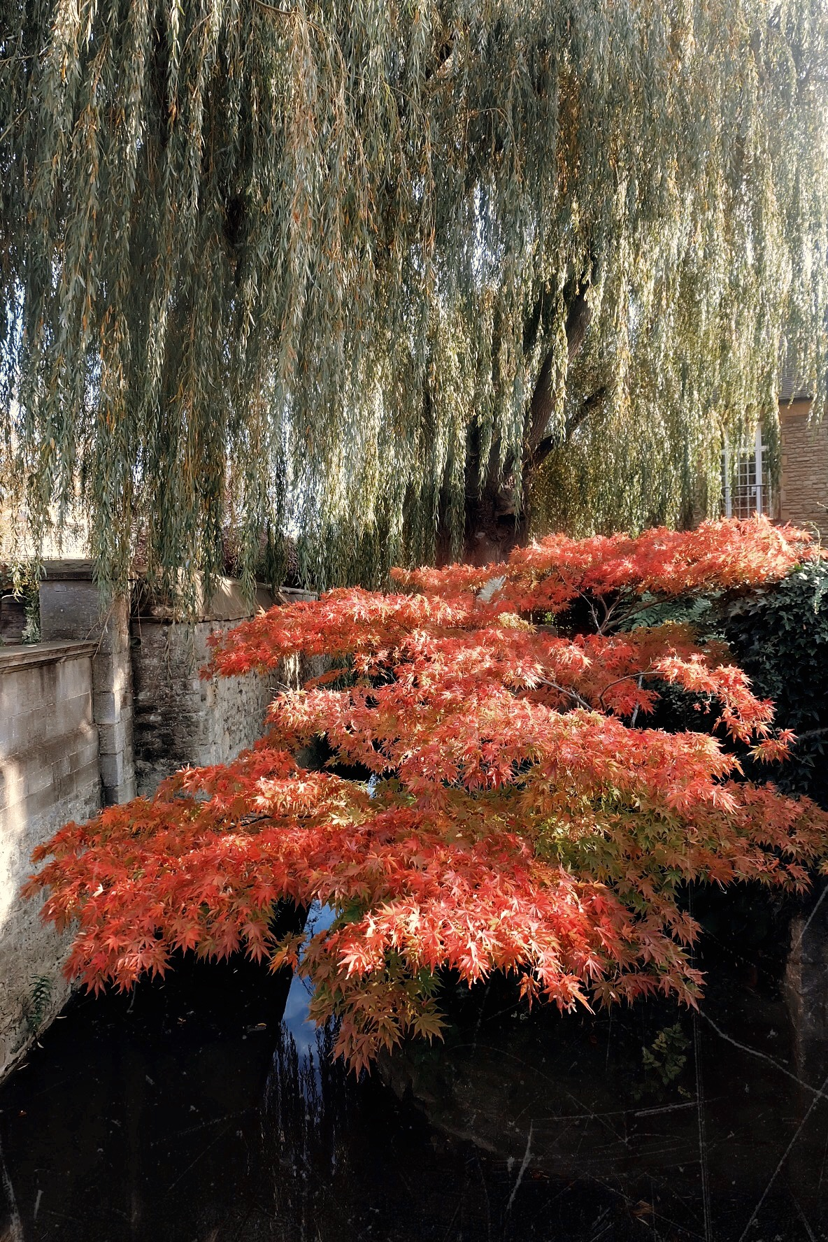 A moment with Maple in Christ Church College Gardens, Oxford