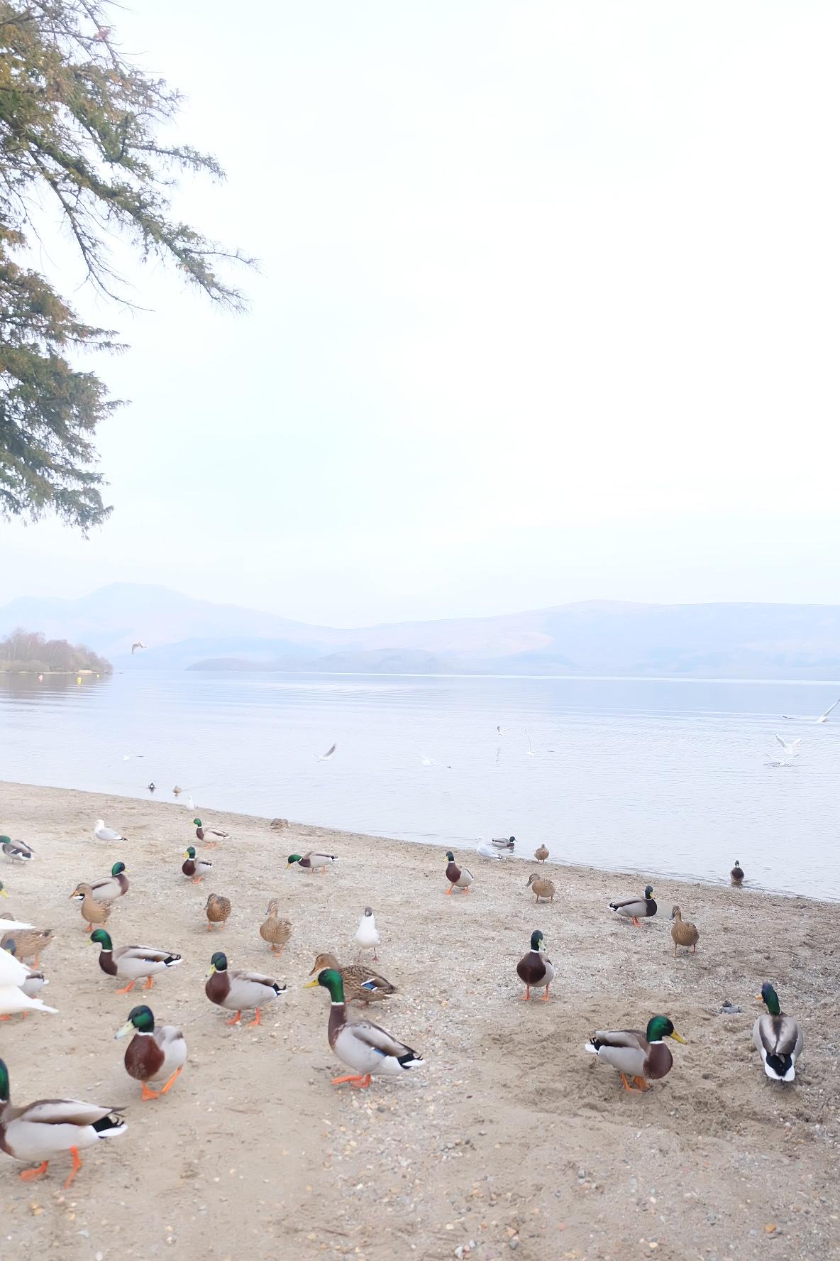Loch Lomond Nixey Luss