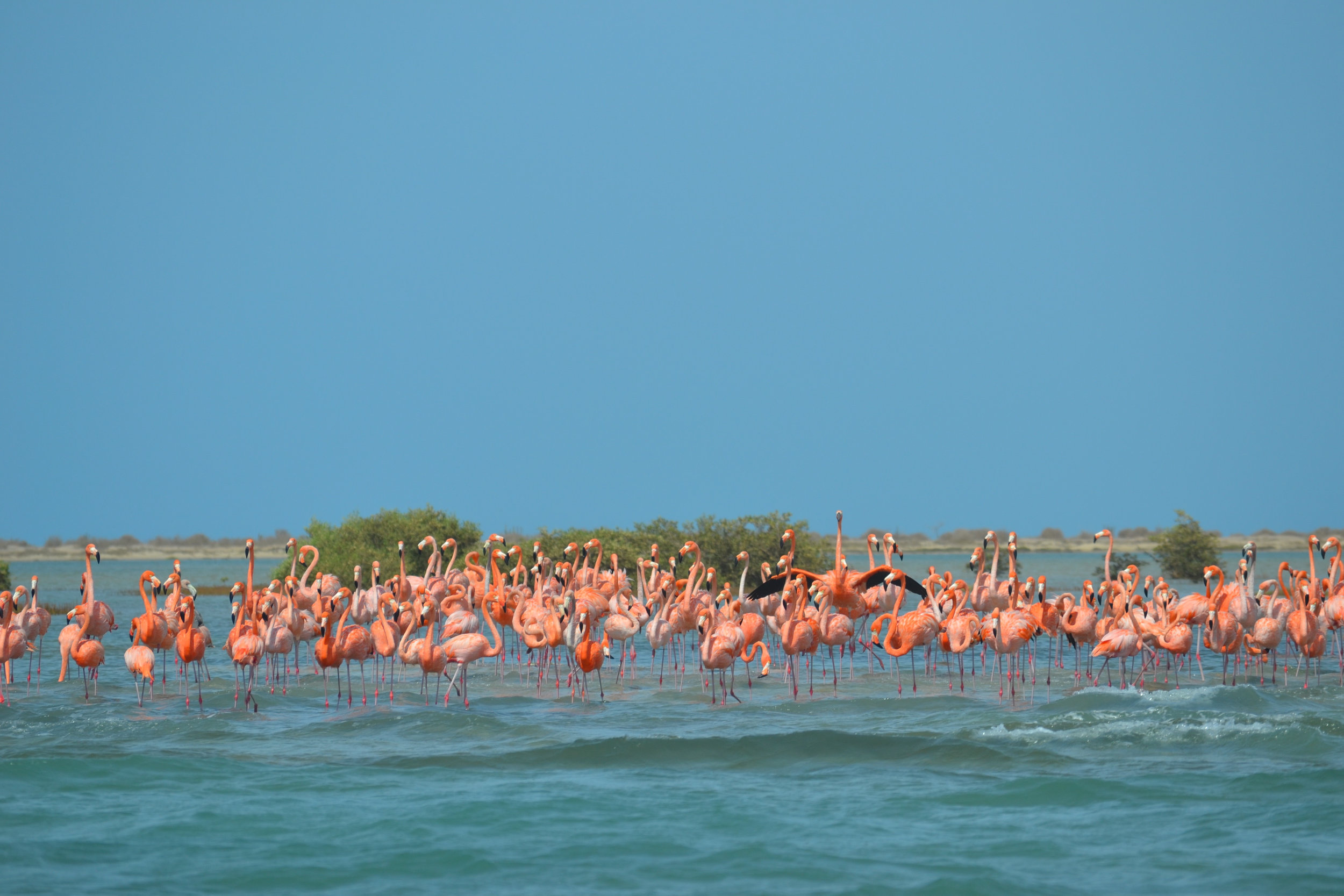 Flamingos, man. Who do they think they are?