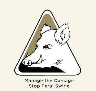 manage-swine