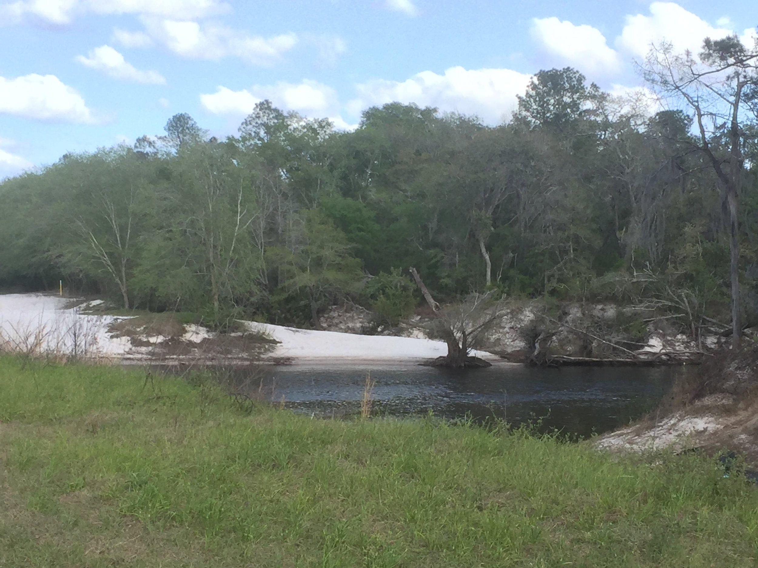 Copy of Alapaha River Lakeland.JPG
