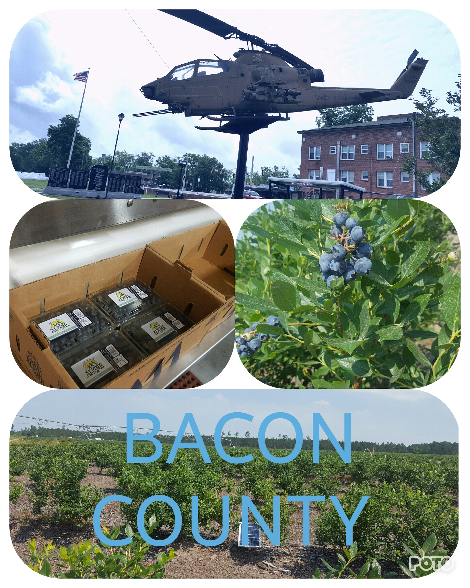Copy of Bacon County Collage.jpg