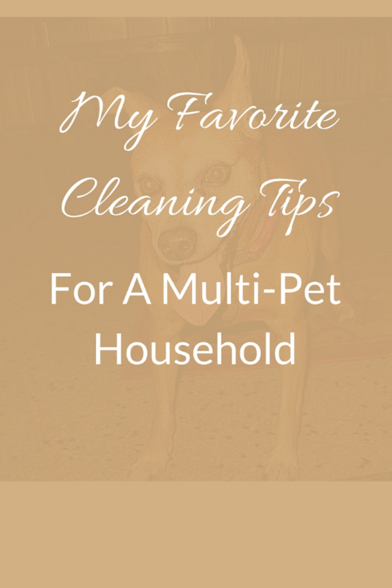 my favorite tips for a multi-pet household