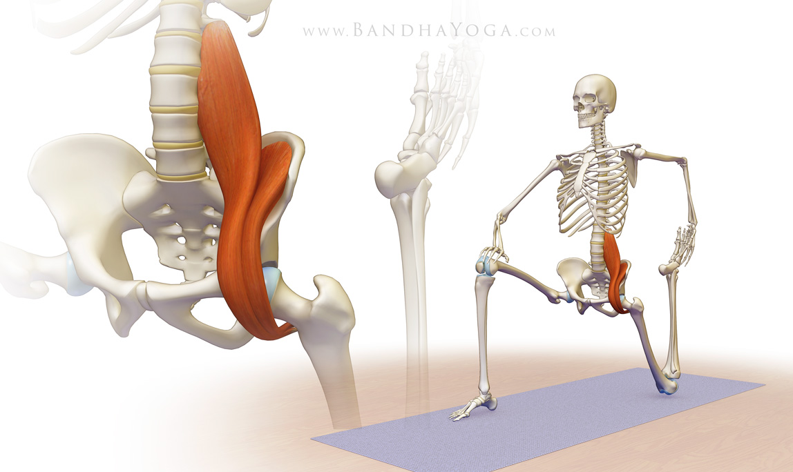 To learn more about the iliopsoas,  click here  - BhandaYoga.com