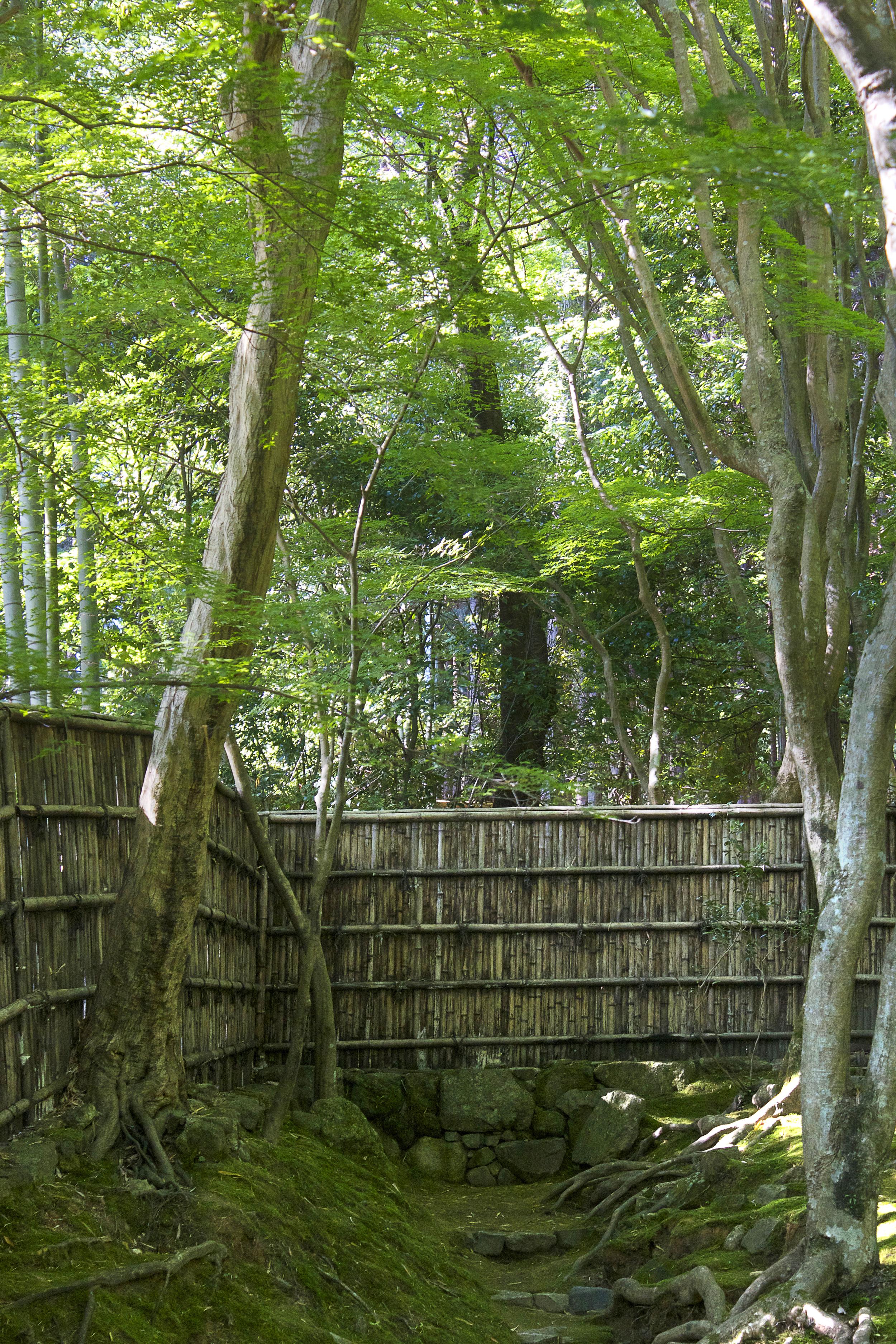 bamboo_wall.jpg