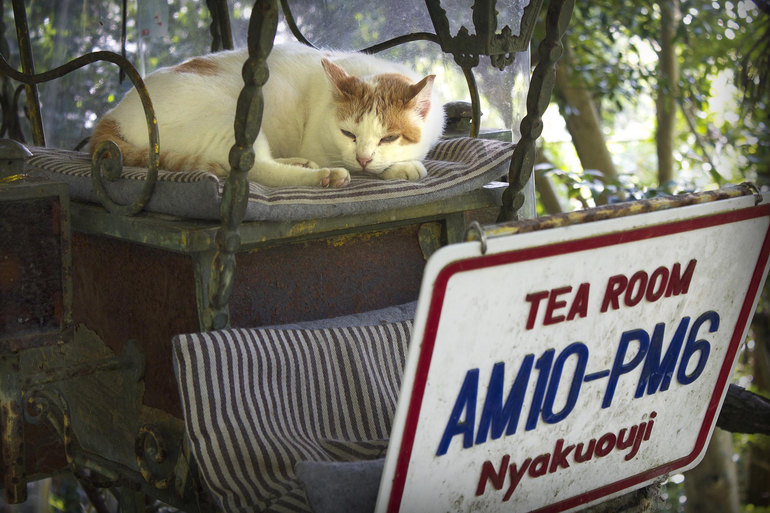Phil_Cat.jpg