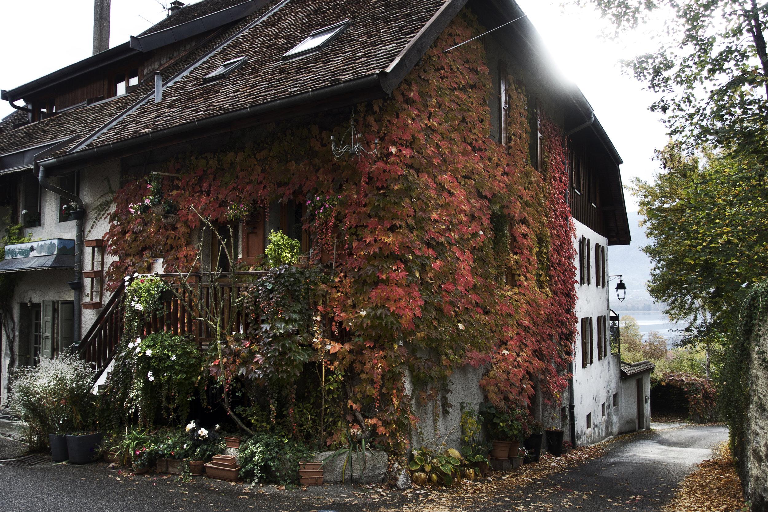 red_leaf_house.jpg