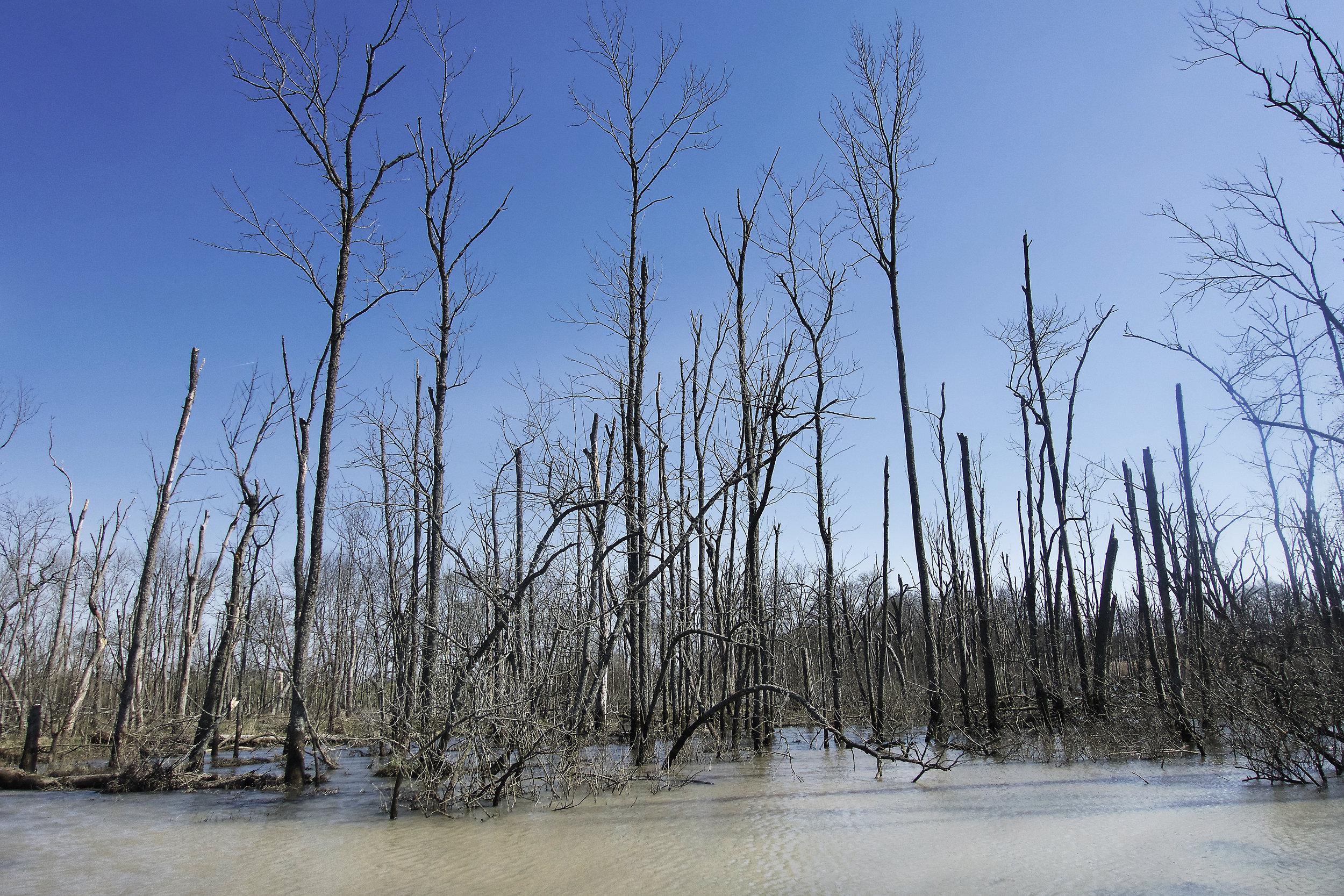 swamp stop