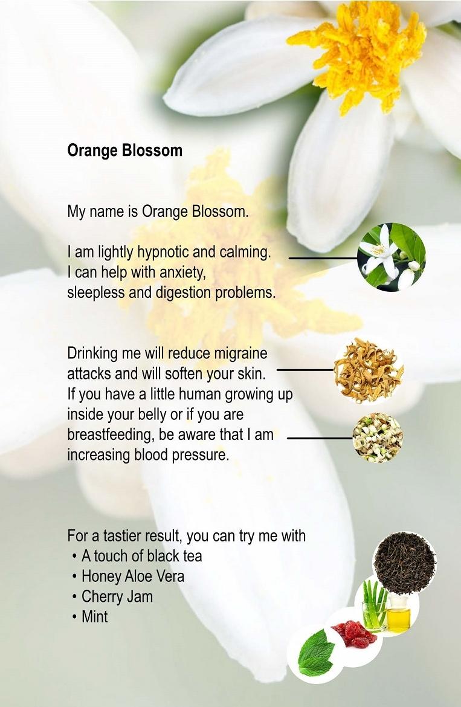 10. Orange Blossom.jpg