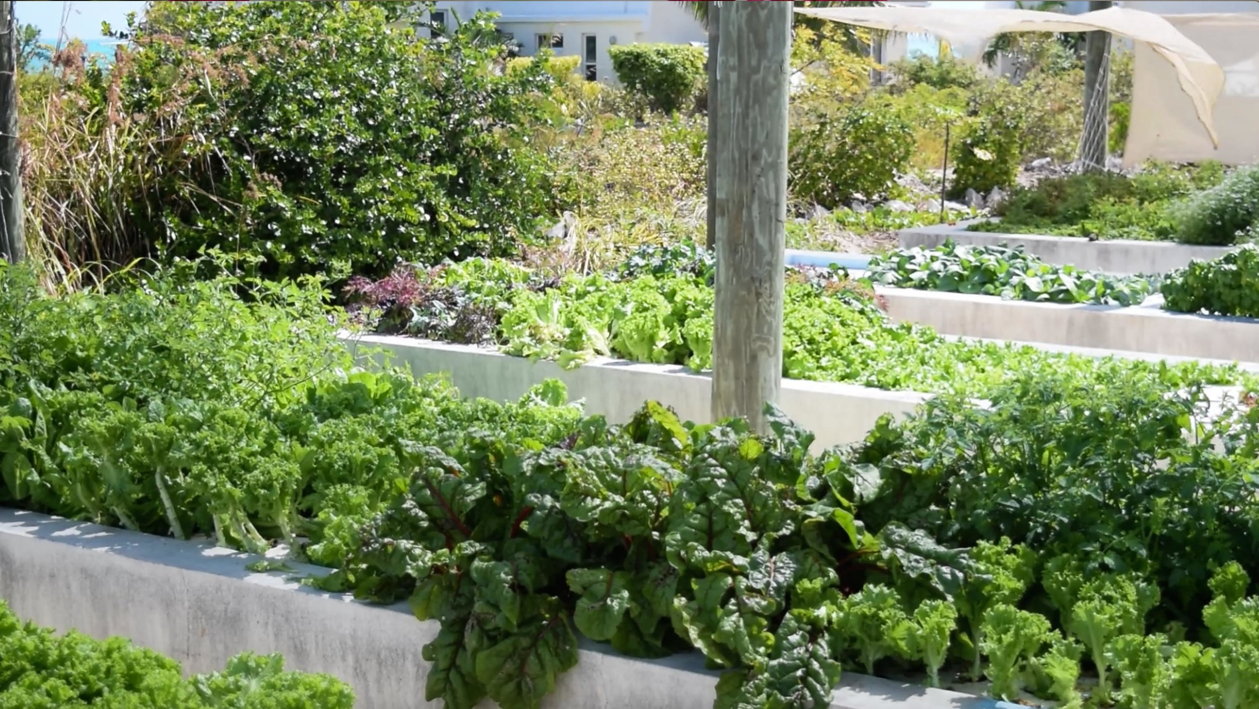 Our aquaponics system provides our dining hall with a variety of delicious vegetables to enjoy!