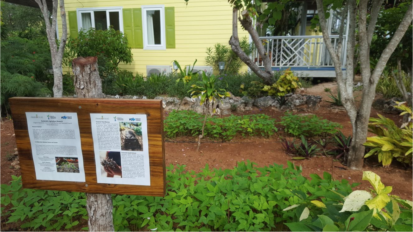 Fall 2017 Island School research field work at Pineapple Fields Condo Resort and Hotel, implementing coconut husk biochar inoculated with seaweed liquid extract and Cowpea (Vigna Unguiculata) seedlings.