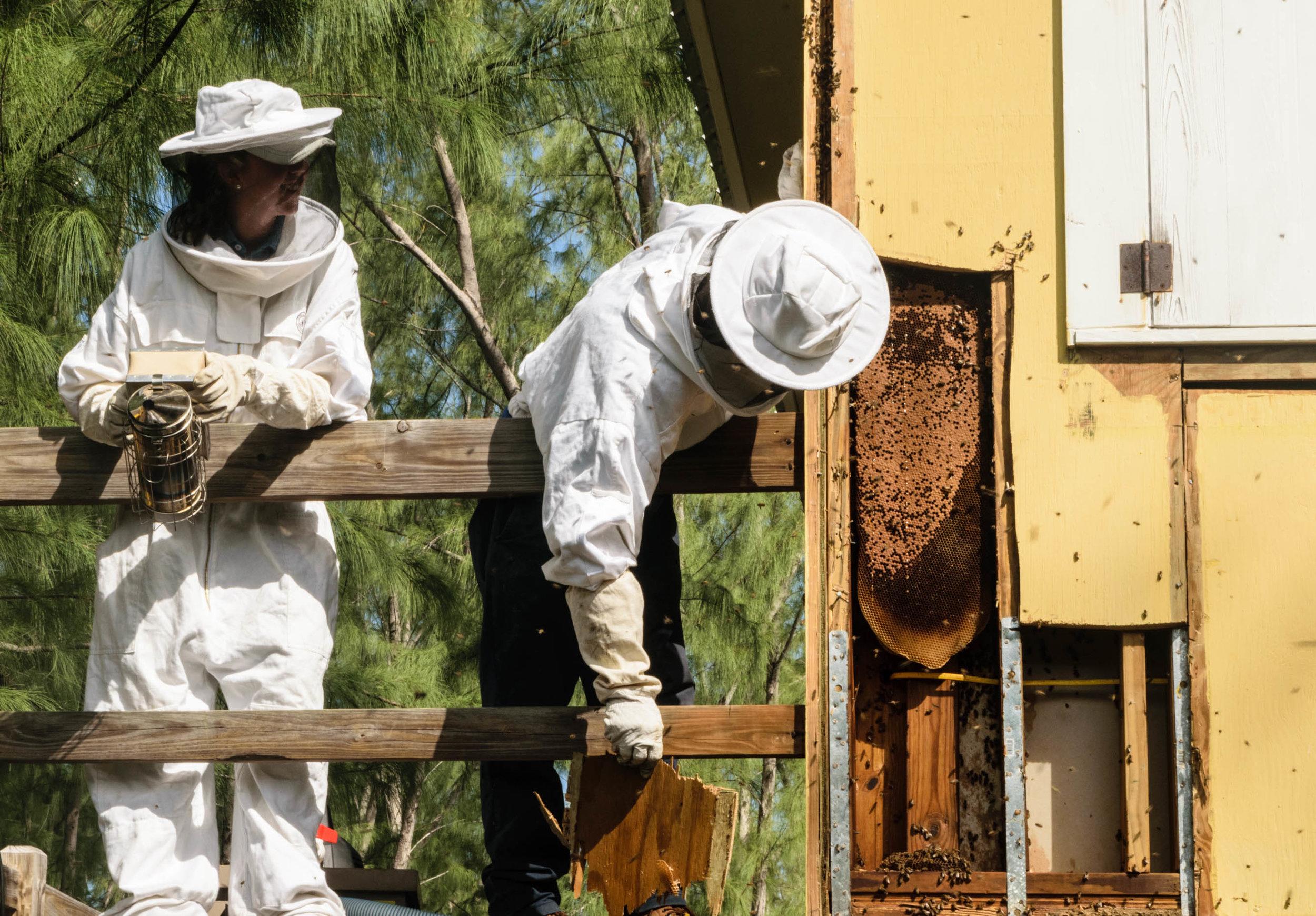 CSD Bees_01.jpg
