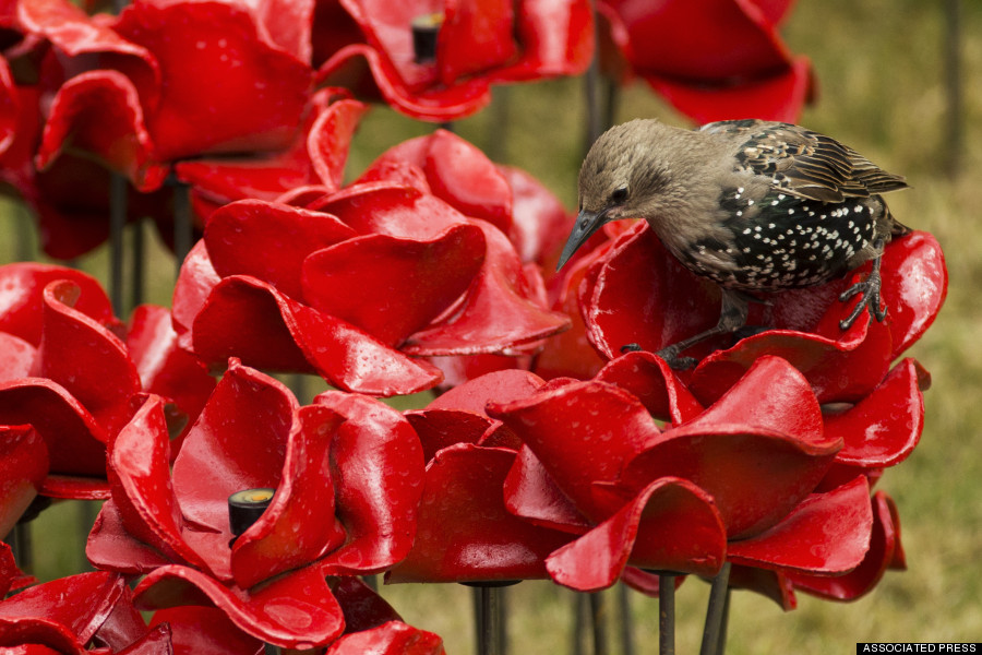 o-CERAMIC-POPPIES-900.jpg