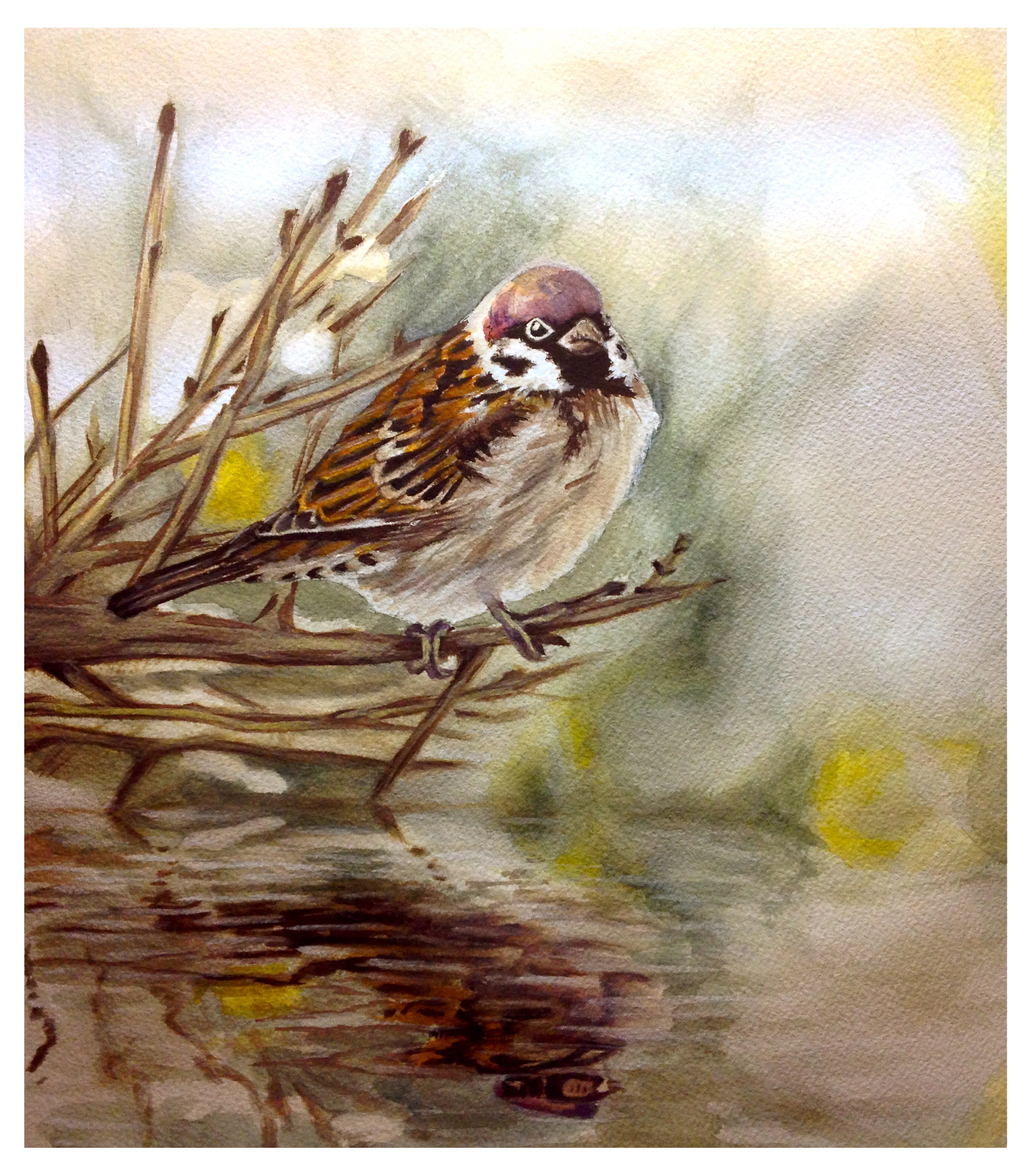 Watercolor-Bird-Edited.jpg