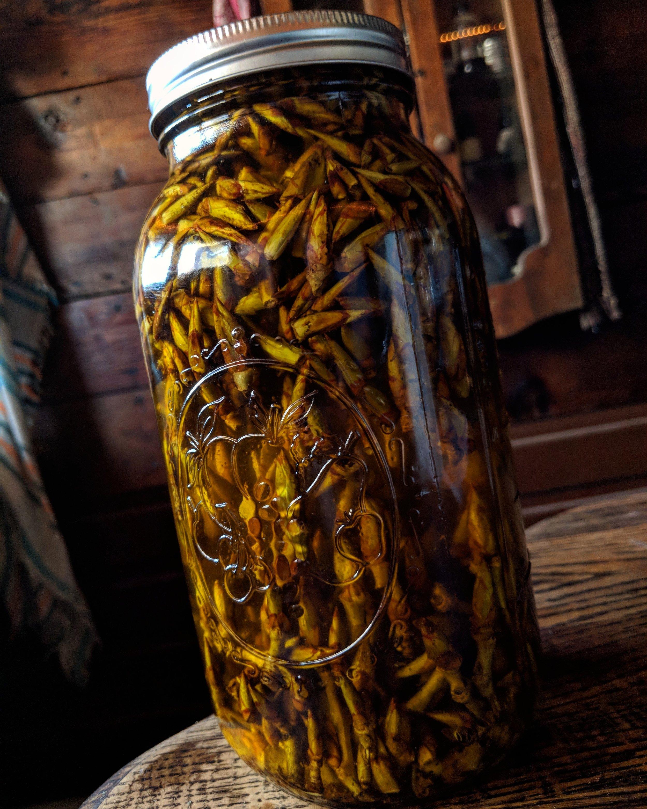 Poplar buds infusing in rich Avocado oil.