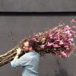 cj-magnolia-branches-150x150.jpg