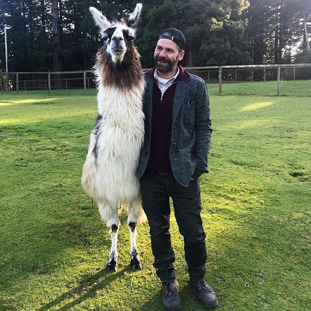 Como se llama? This is my new buddy, Pop Tart! #llamas #llamalove #llamafarm #countryboy #besties