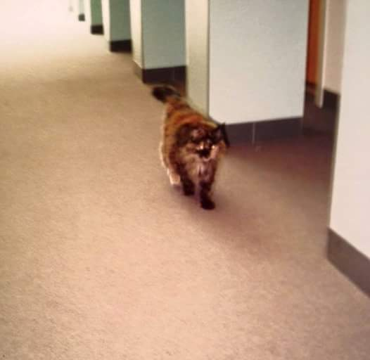 Prince's cat Paisley roaming the halls of Paisley Park. Photo provided by Bryan Black.
