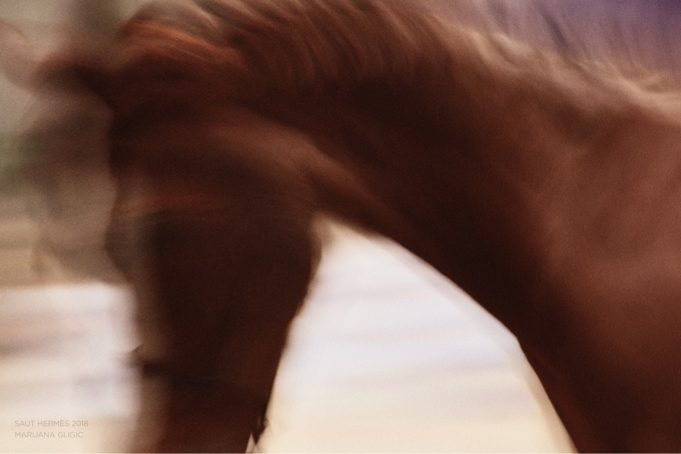 MARIJANA GLIGIC SAUT HERMES HORSES2.JPG