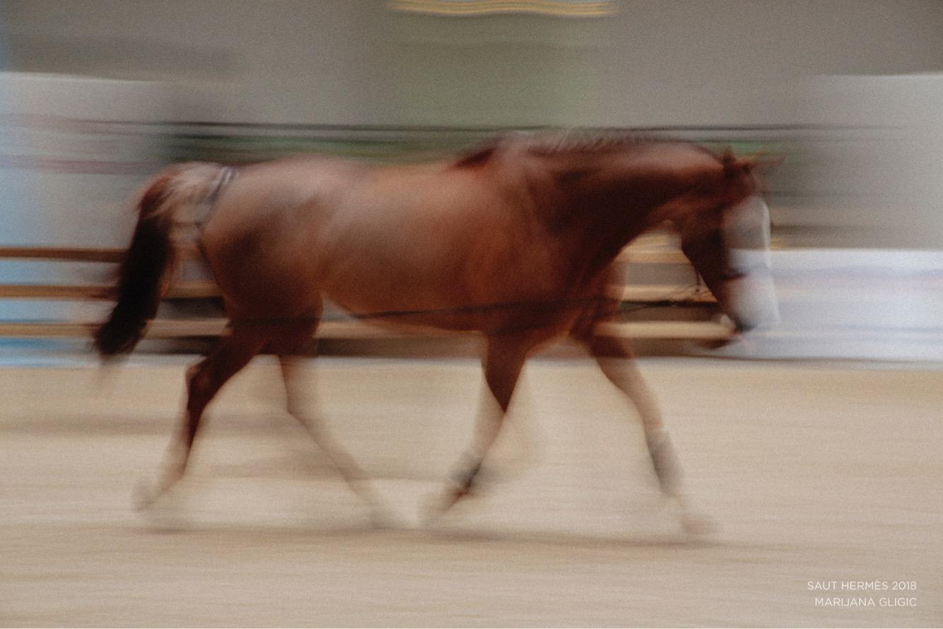 MARIJANA GLIGIC SAUT HERMES HORSES1.JPG