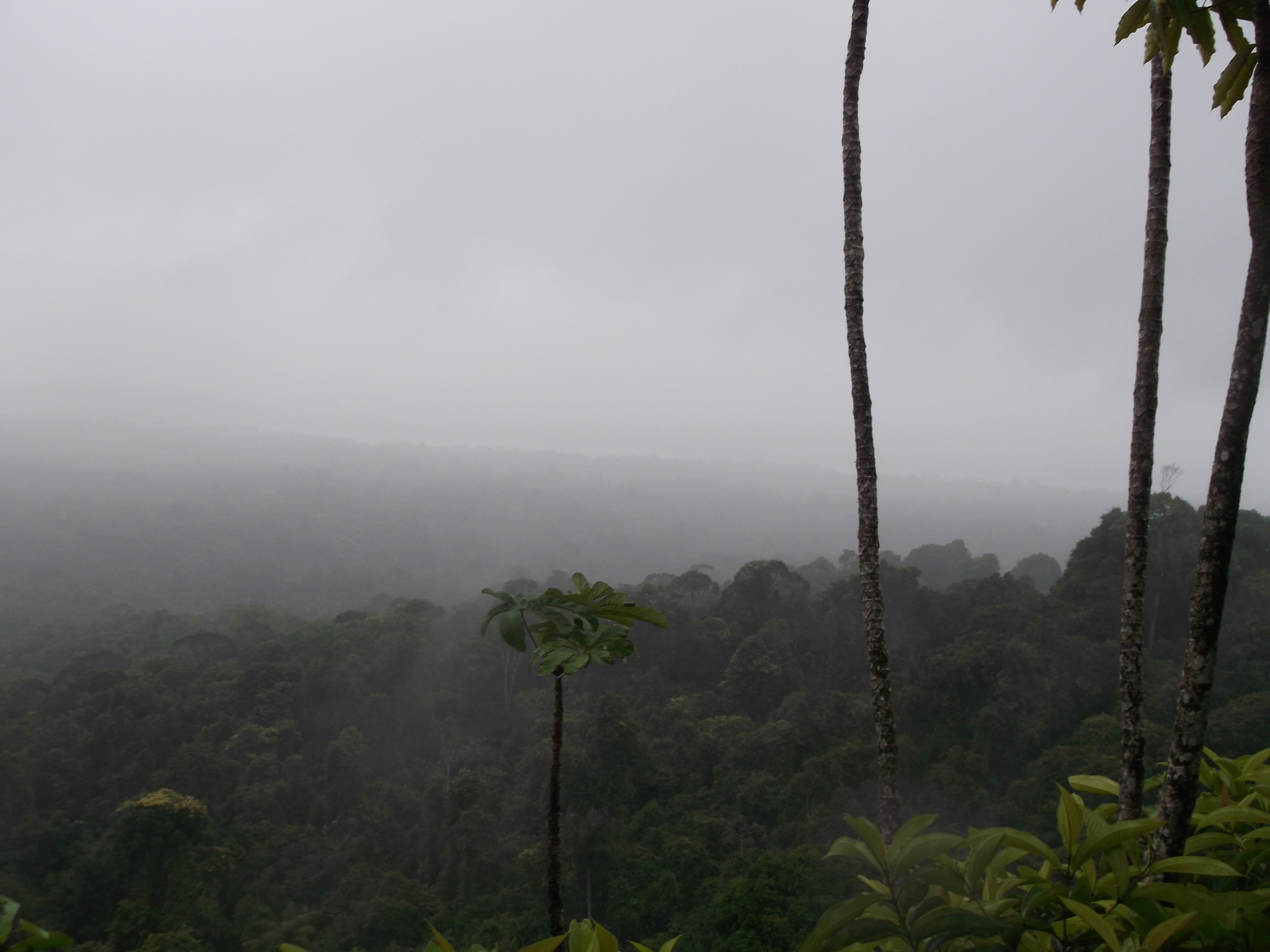 Turtle Mountain, Guyana