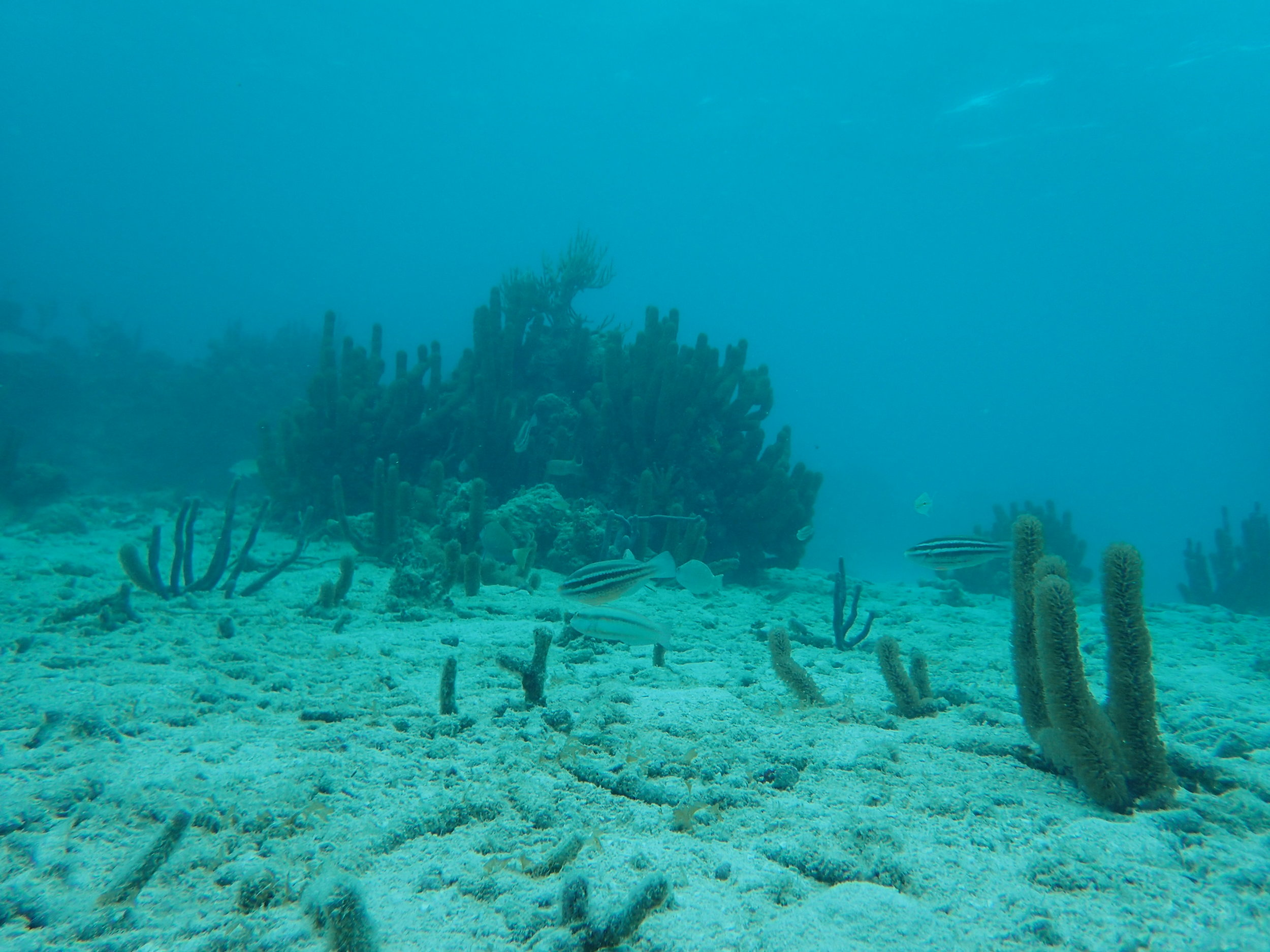 Coral and tropical reef fish abound in the biodiverse waters of Belize