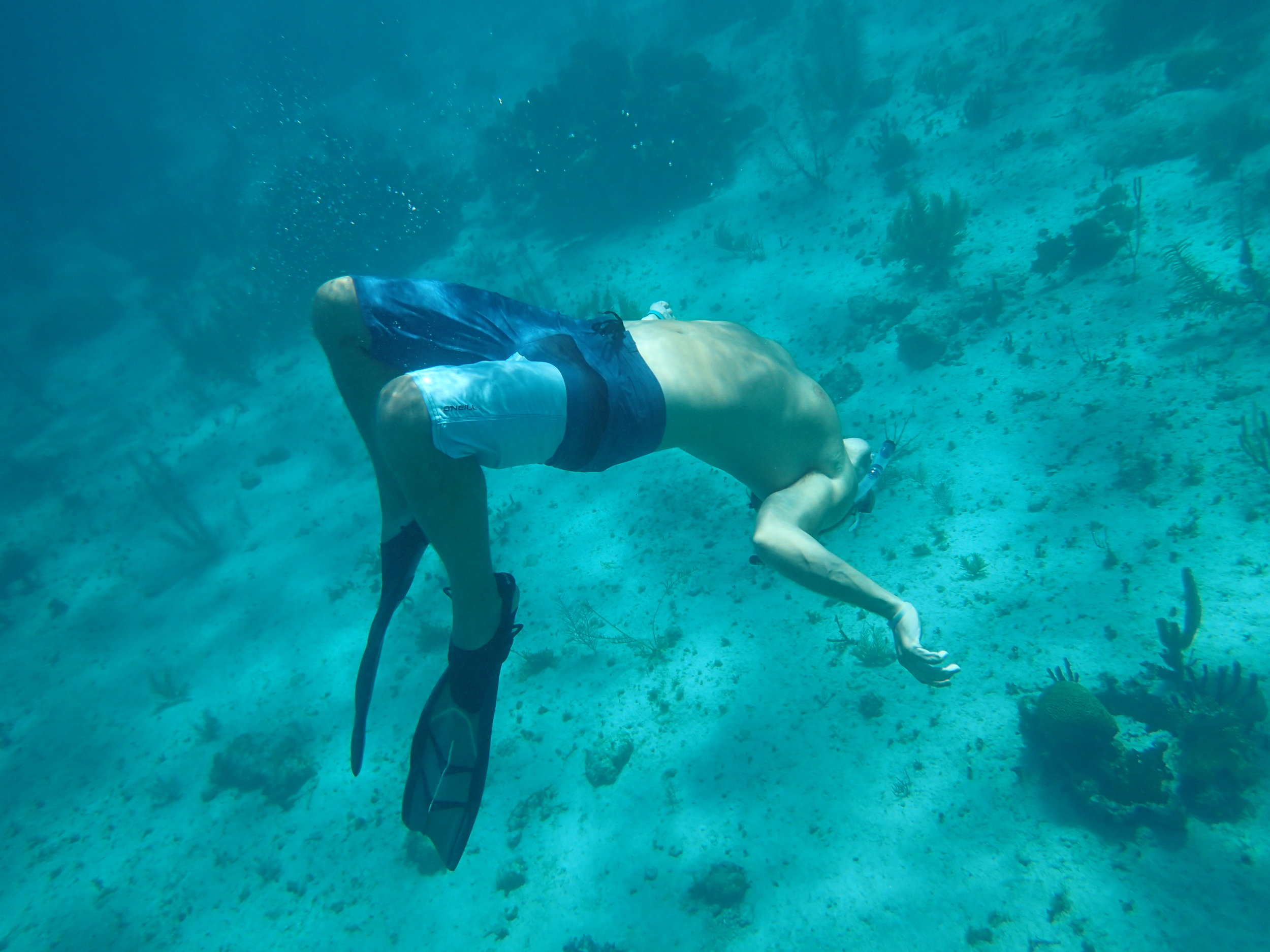 Exploring the reef is impactful - many people are surprised that learning to identify fish makes them feel connected