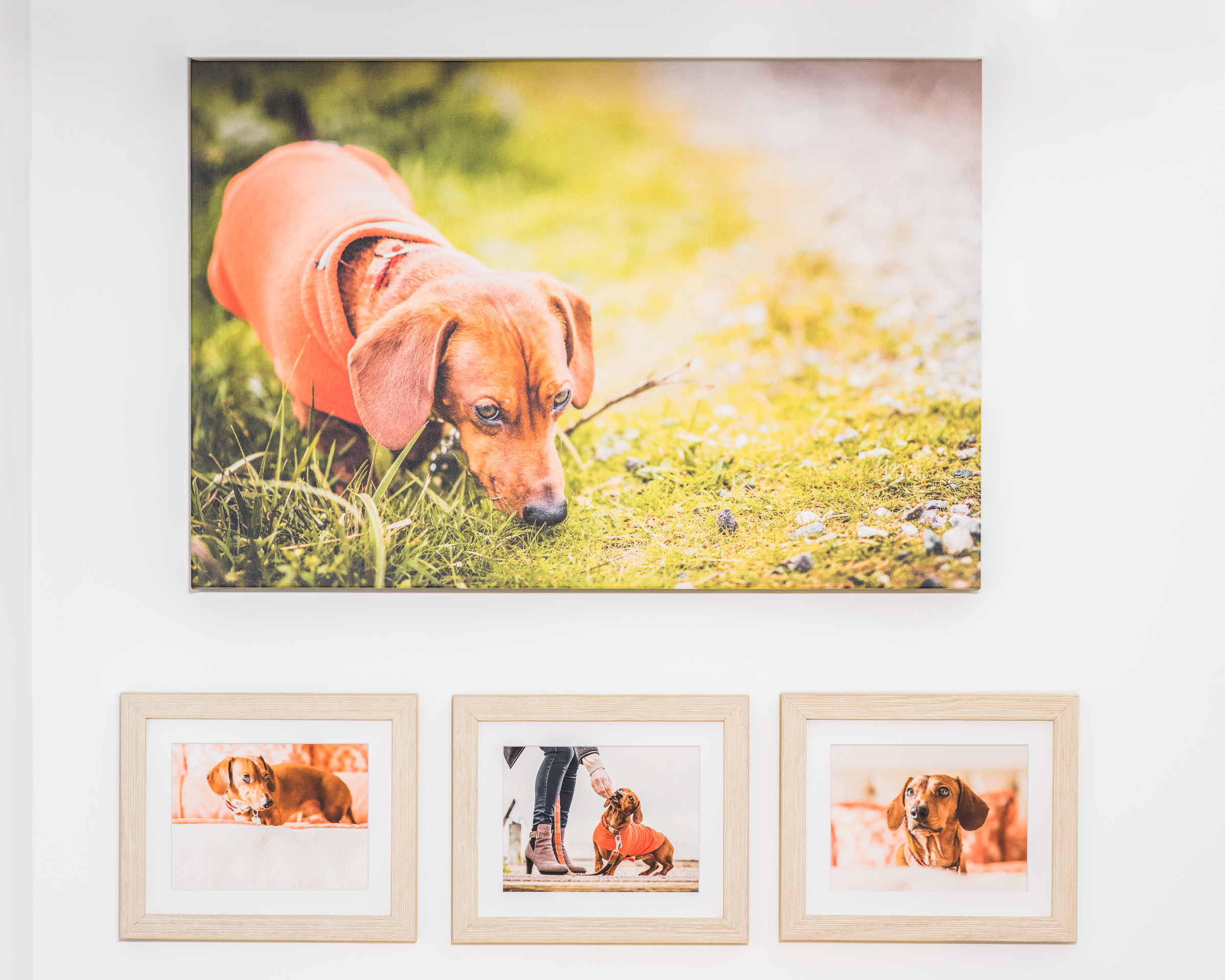 """A custom gallery wall display of Oxley, featuring a 30"""" canvas."""