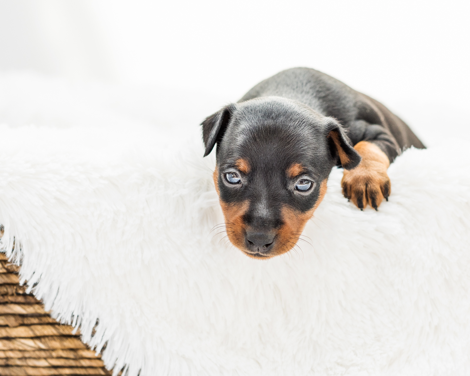 Puppies-01.jpg
