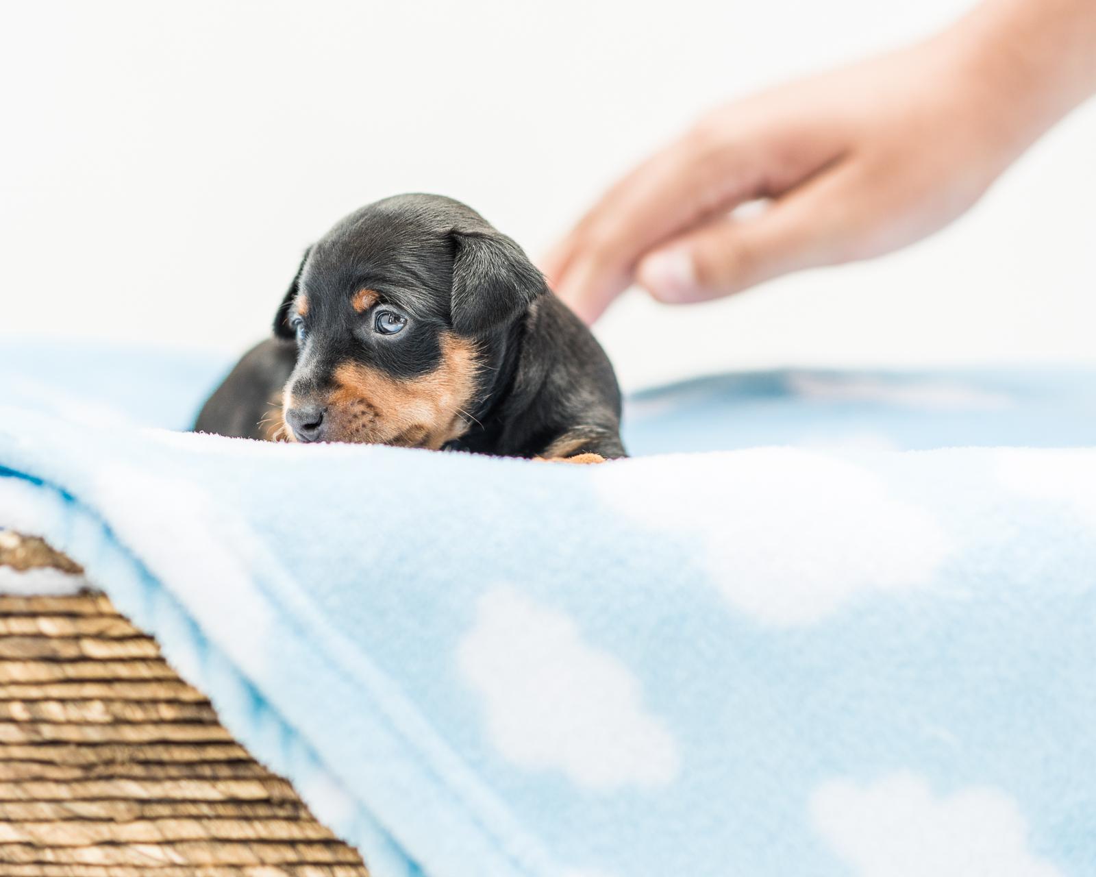 Puppies-05.jpg