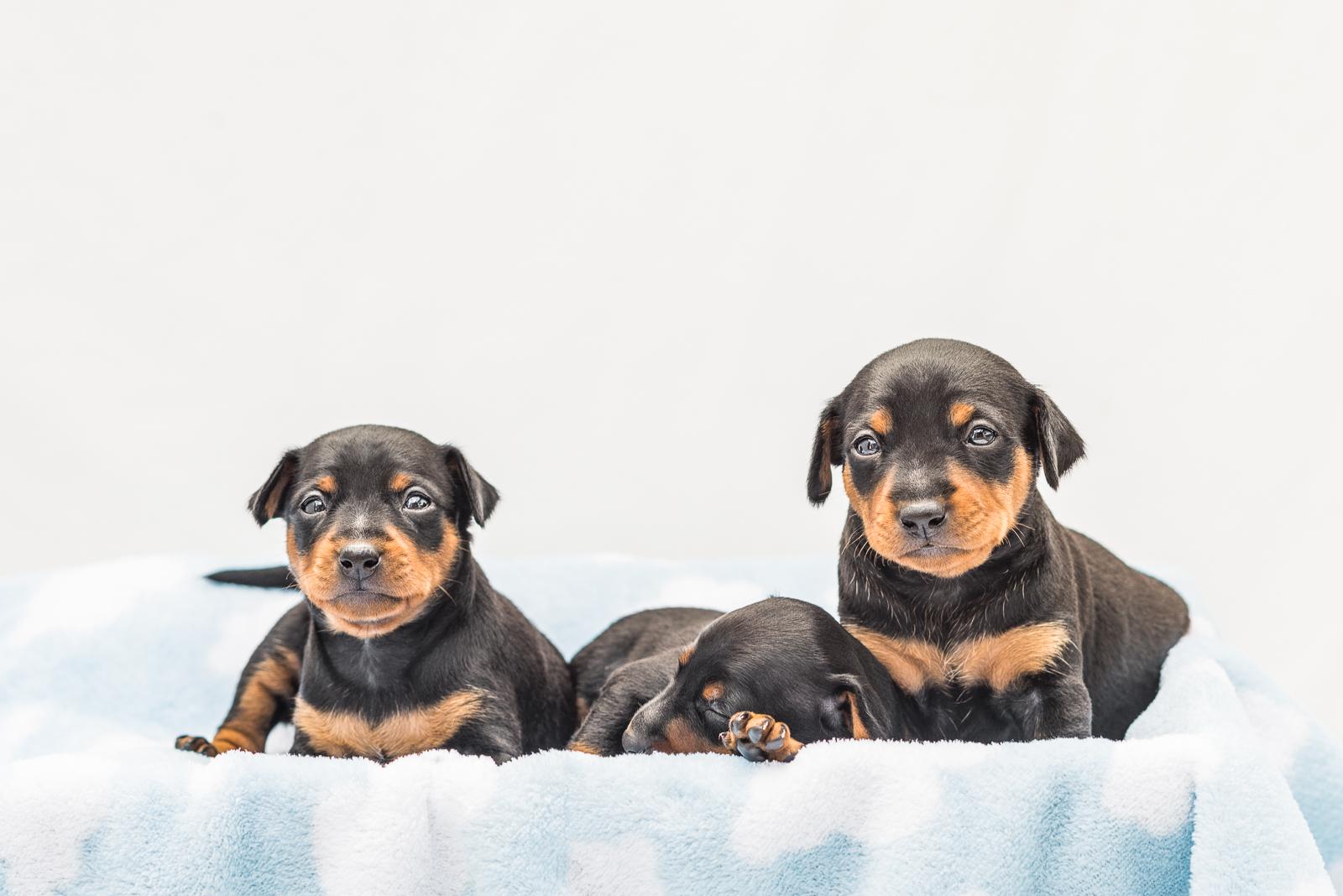 Puppies-11.jpg