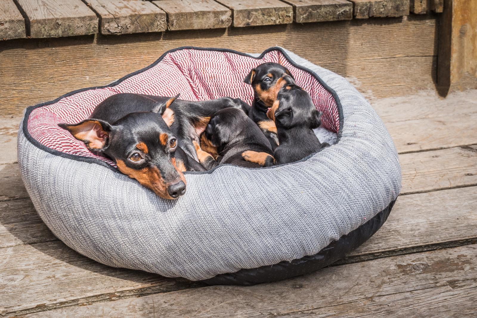 Puppies-15.jpg
