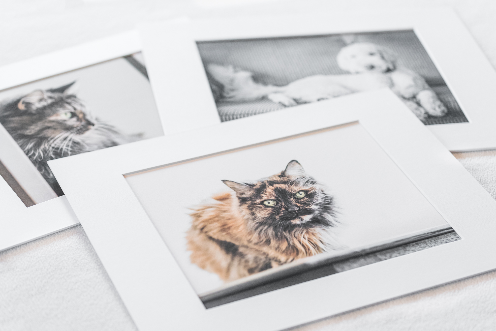 Matted prints - two senior cat sisters and their puppy
