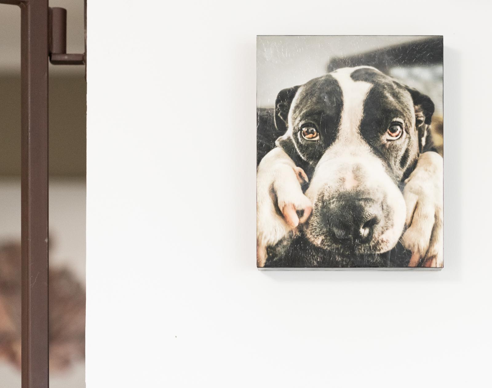 Pongo's portrait on the wall!