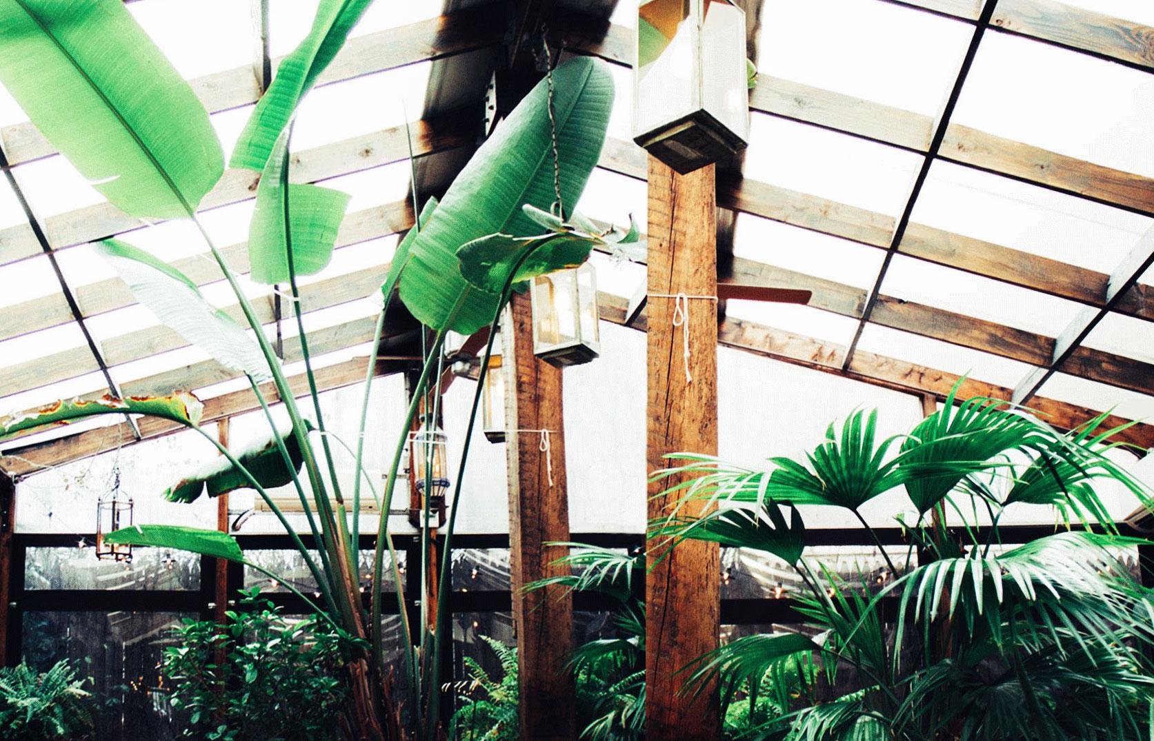 Brooklyn Mogador's garden with tropical plants