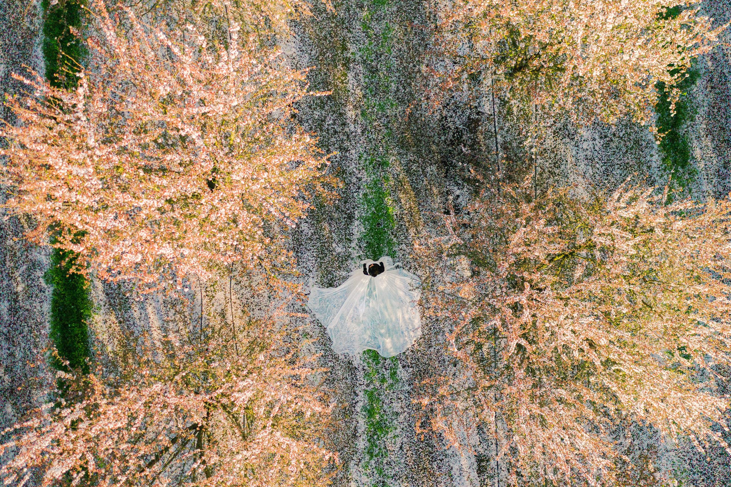 Almond Field aerial overhead-smaller.jpg