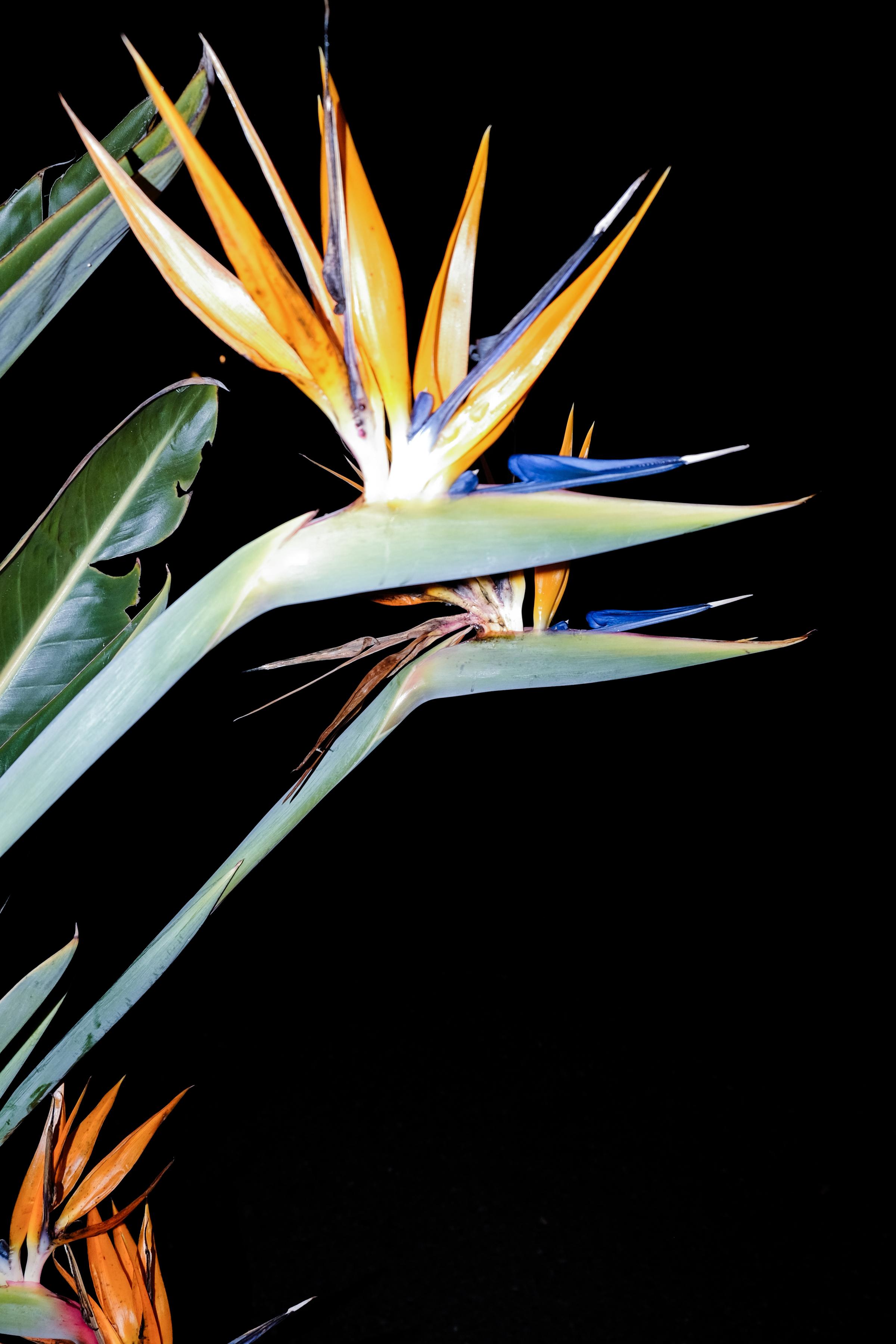 Floral-8.jpg