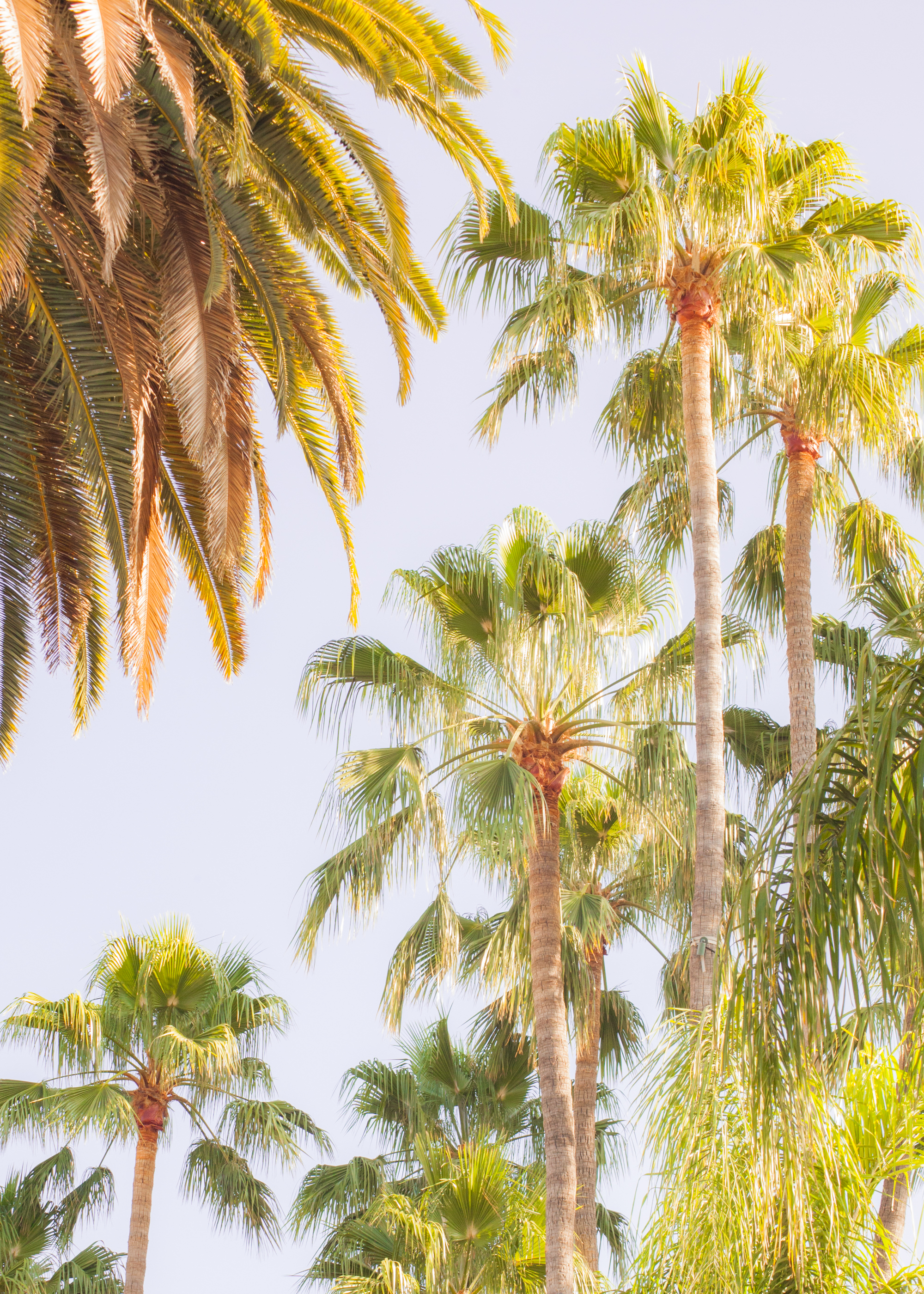 Hollywood-4.jpg