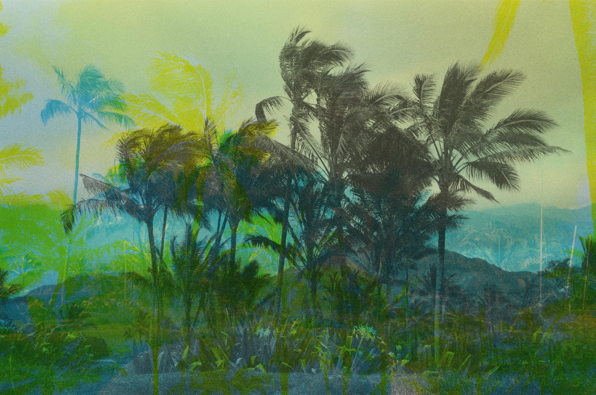 Palm Trees Collage Portrait CYK.jpg