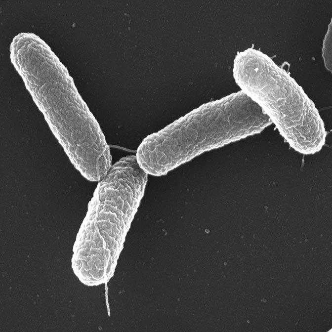 Salmonella Contamination