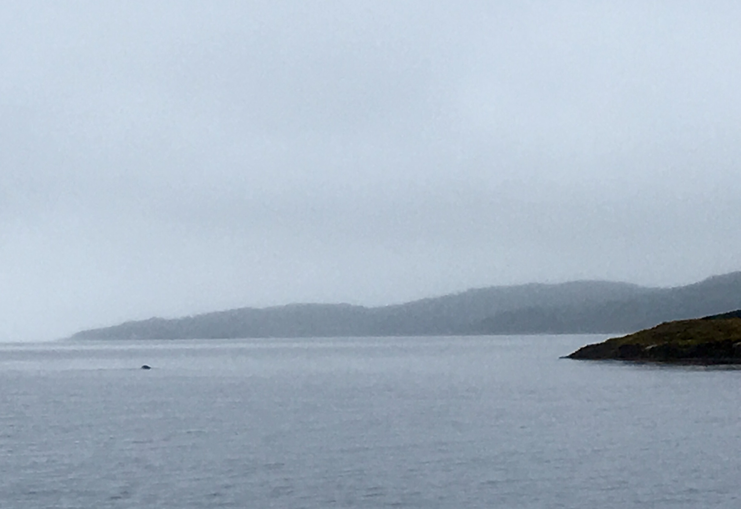 Spot the seal, he doesn't seem to mind the rain.
