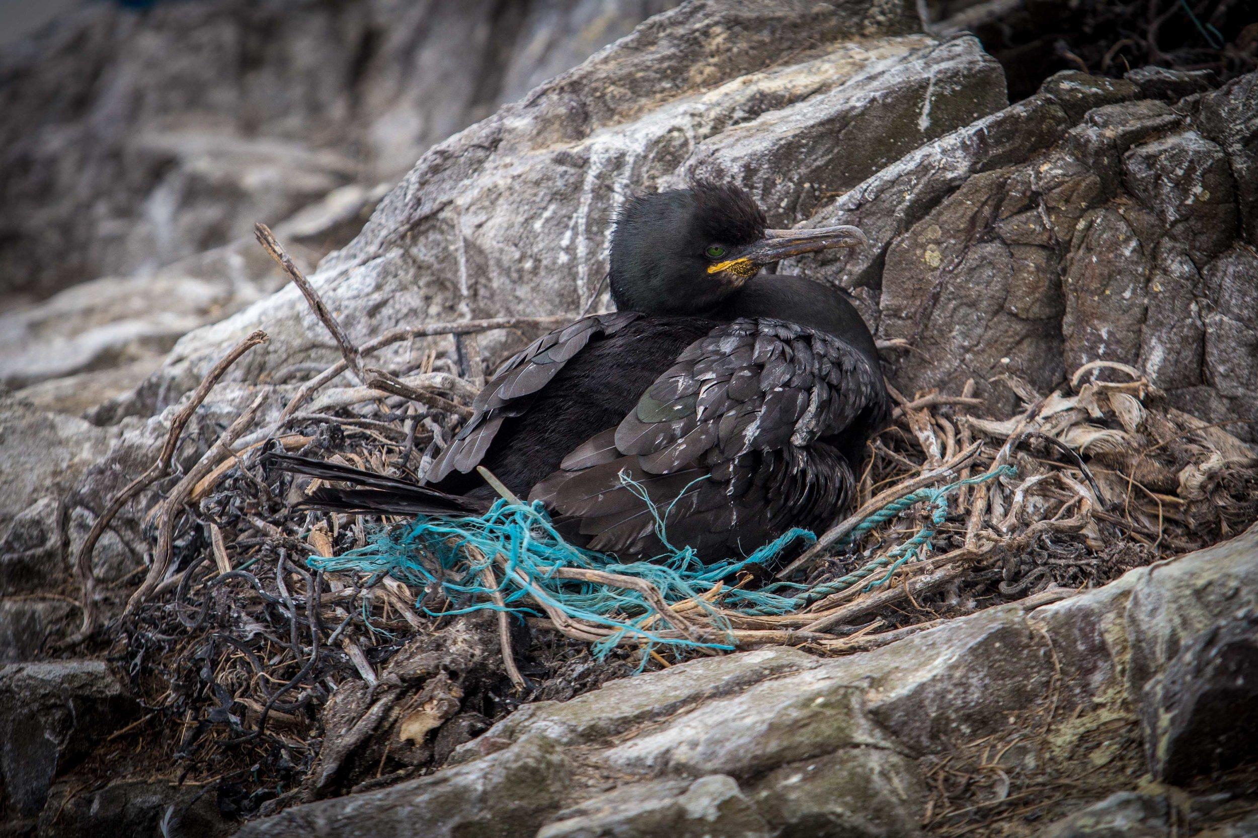 Bird in nest made of plastic