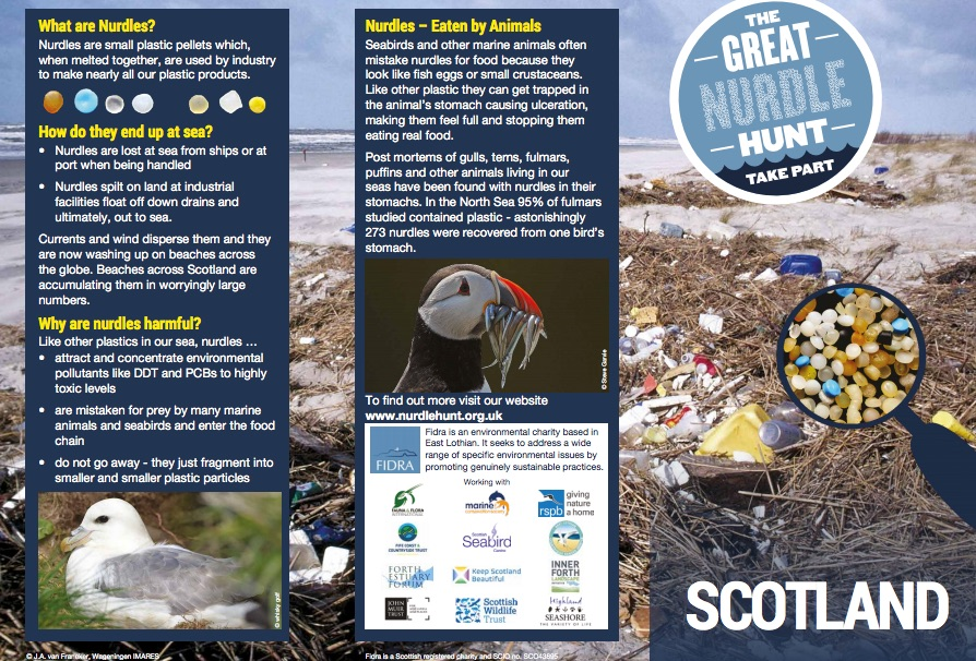 The Great nurdle hunt for plastic beach litter