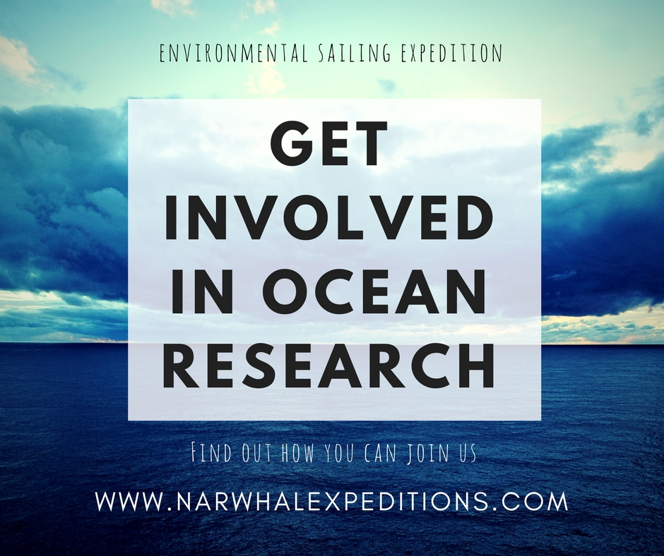 Get involved with ocean research with Narwhal Expeditions